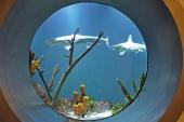 bullaugeneueshammerhaibeckengntherhulla